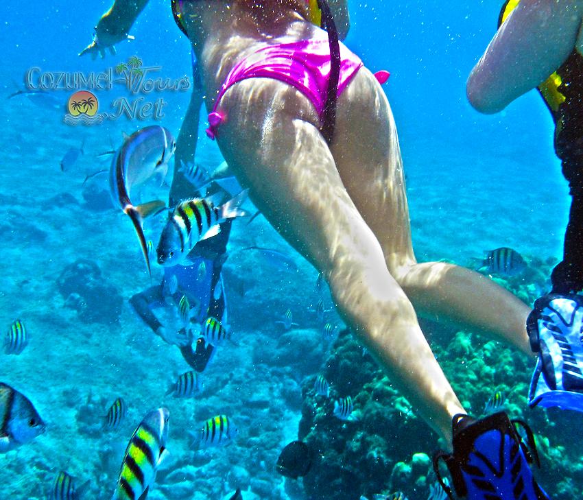Cozumel Snorkel Tour Reef